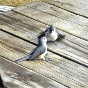 small talk birds