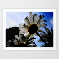 White Daisy in the sky print