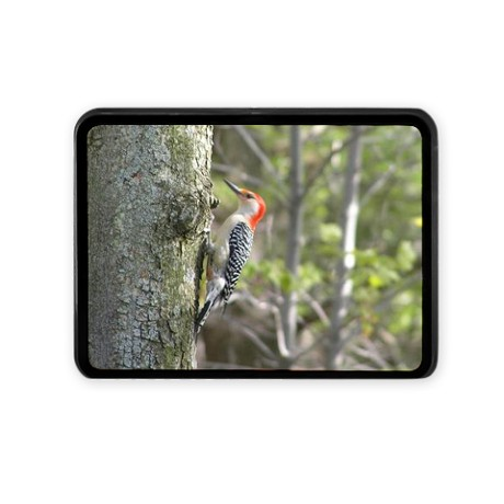 Red Headed Woodpecker Hitch Cover by listing-store-11861778