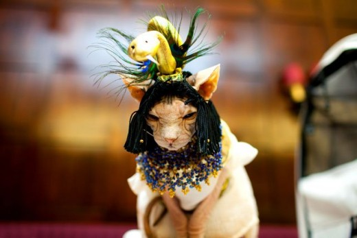 ... Cat Costume for Halloween & cleopatra cat | Home