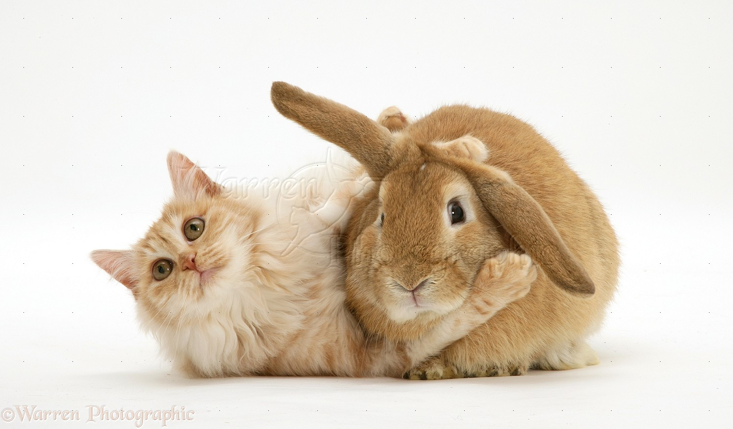 Bunny And Cat Photographsat And Sandy Lop Rabbit Home