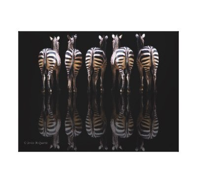 Welcome to Animal Cognizance: Amazing African Animal Photography on Wrapped Canvas