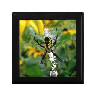 Orb Spider in Web Jewelry Box